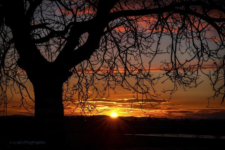 black tree1920